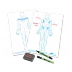 Cheap Stationery Supply of Show Me Human Body Class Pack Pack of 35 C/HBB Office Statationery